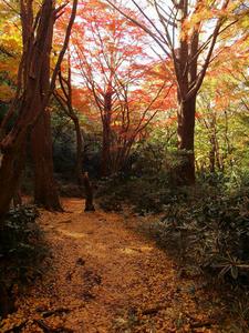 20101226_560shuusei.jpg