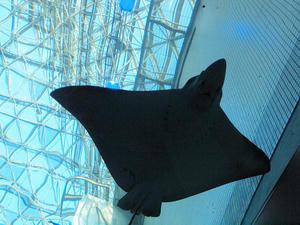 20111011_752shuusei.jpg