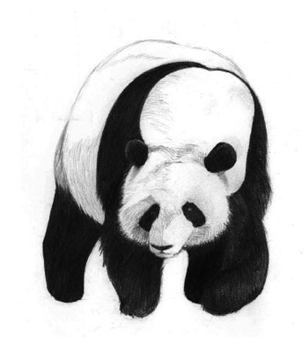 20100914_panda.jpg