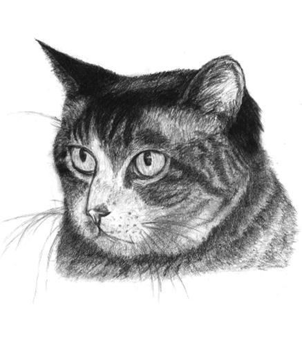 20100914_cat.jpg