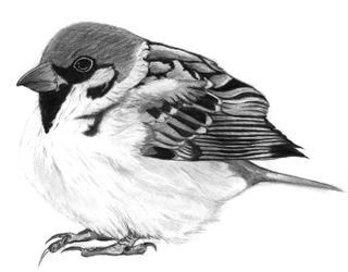 20100914_bird.jpg