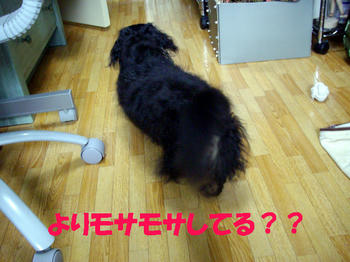 090801_2.jpg