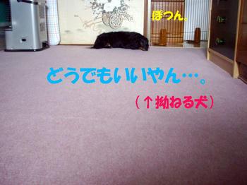090802_9.jpg