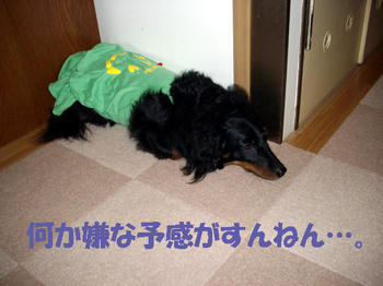 100610_1.jpg