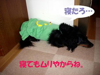 100610_2.jpg