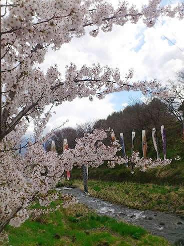 5月初旬に桜満開。