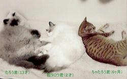 猫さんズ.jpg