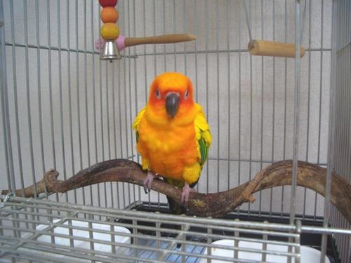 インコ、オウムなど鳥かごのカバー用アクリルケース保温・防音・脂粉対策
