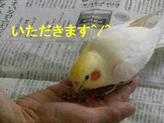 横浜・パールちゃん