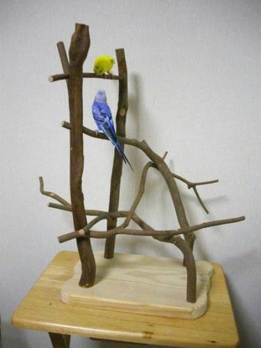 小型鳥インコ等 自然木止まり木