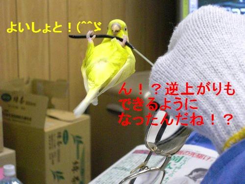 大阪のレモンちゃん