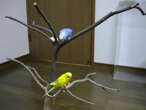 ハッピーケース ぶぶ きぶ 止まり木