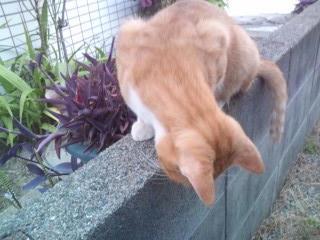 猫のジロー