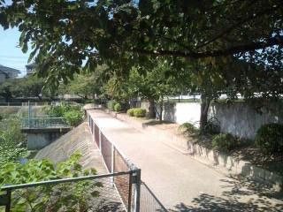 池の周りをウォーキングできる公園