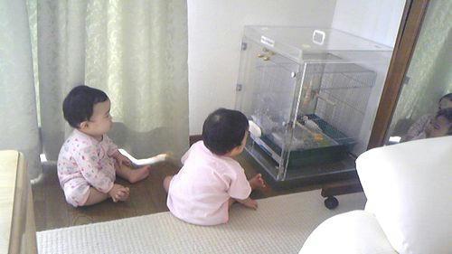 赤ちゃんと、Niko、Popotanちゃん、そしてアクリル鳥かご鑑賞ケース