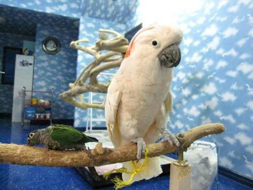 14羽のいろんな種類の鳥さんの鳥部屋