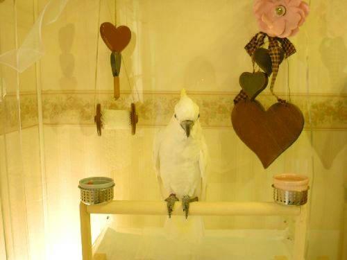 アクリル鳥かご鑑賞ケースご使用例 インコ、オウムなど鳥かごのカバー用アクリルケース 保温・防音・脂粉対策