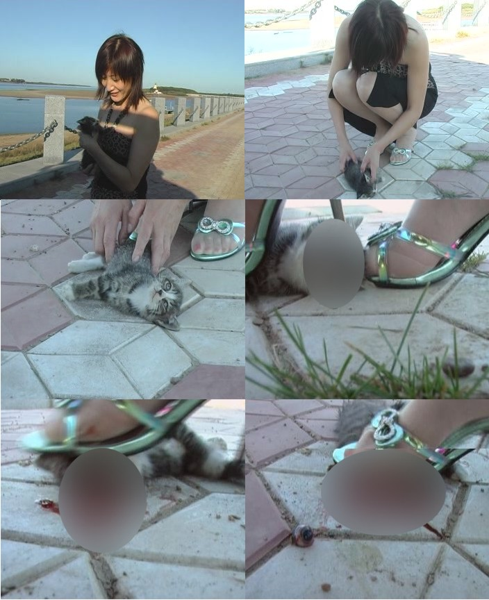 中国人女性による子猫虐殺画像
