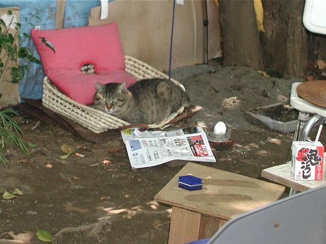 ホームレスが飼っている猫。幸せそうだった。