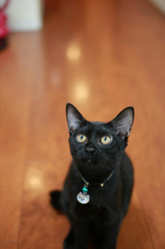 黒猫 パンが好き