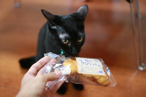 黒猫と、クロワッサン