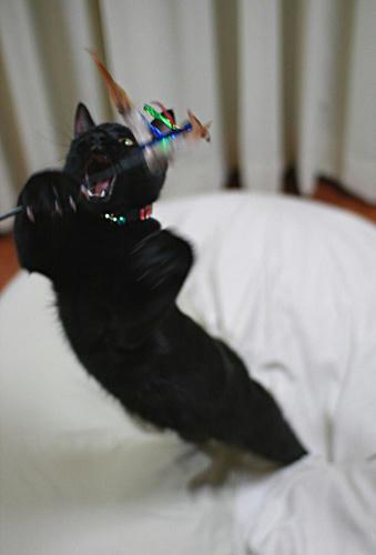 飛び出せ黒猫