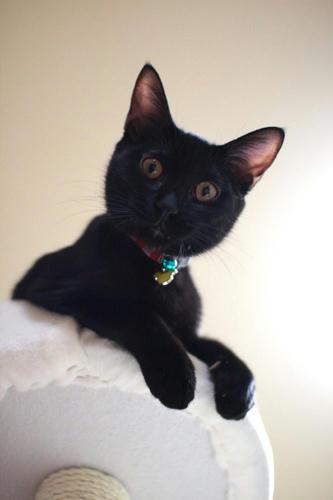 黒猫、不敵な笑み。