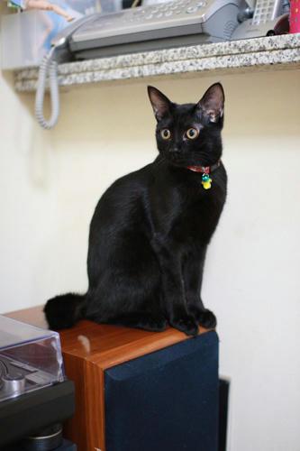 黒猫と、モニタースピーカー。JBL