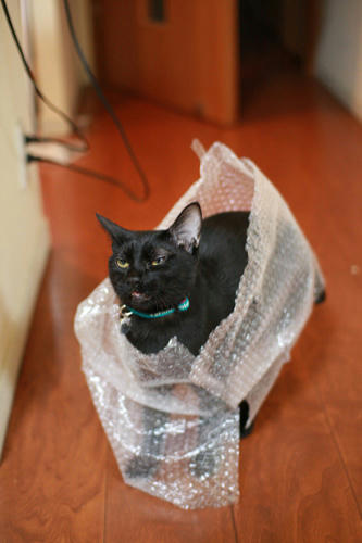 黒猫 プチプチ