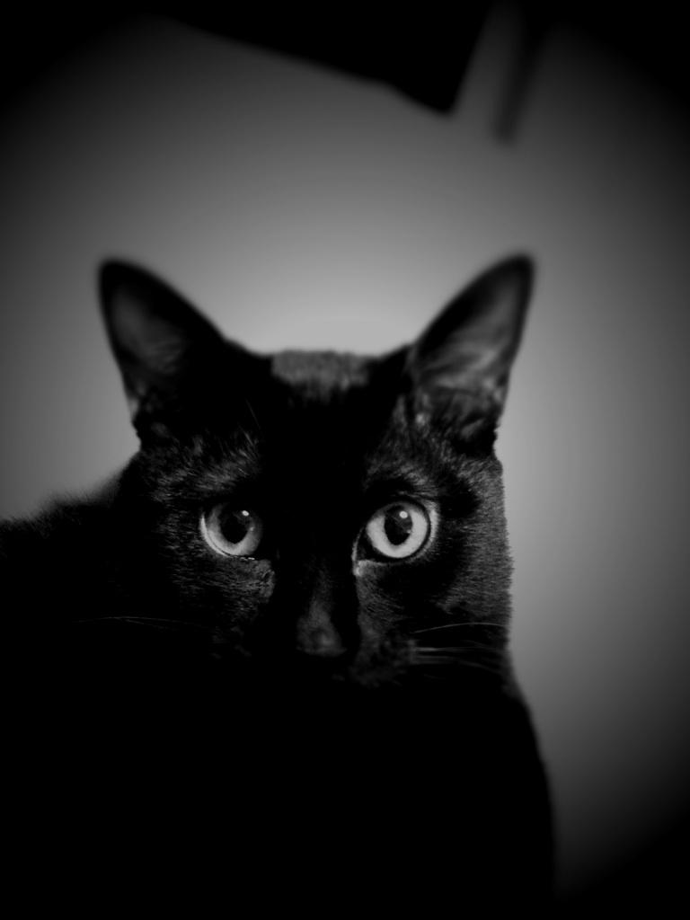黒猫の、携帯待ち受け画面。
