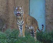 070519多摩zoo02