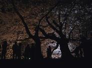 夜の彦根城 ライトアップ夜桜