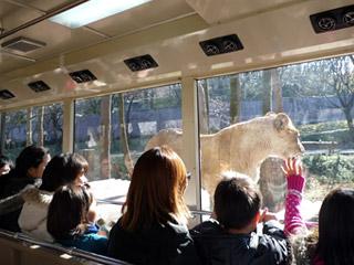 多摩動物公園 ライオンバス