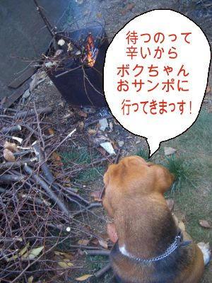 嘆きの犬.JPG
