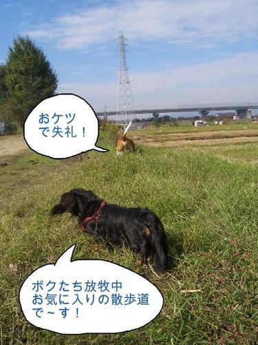 なんちゃって牧場.JPG