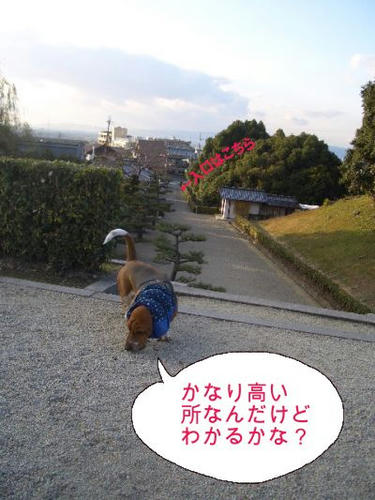 クンクン中.JPG