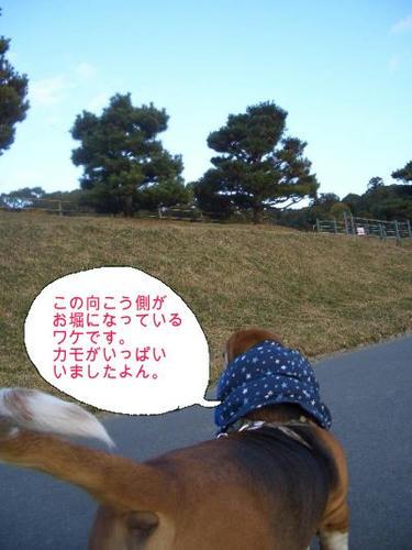 ハイキングコース.JPG