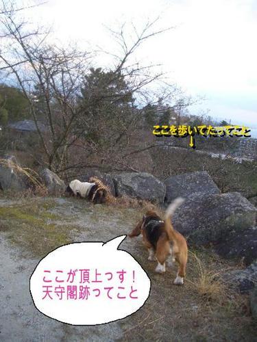 天守閣跡.JPG
