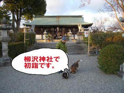 柳沢神社.JPG