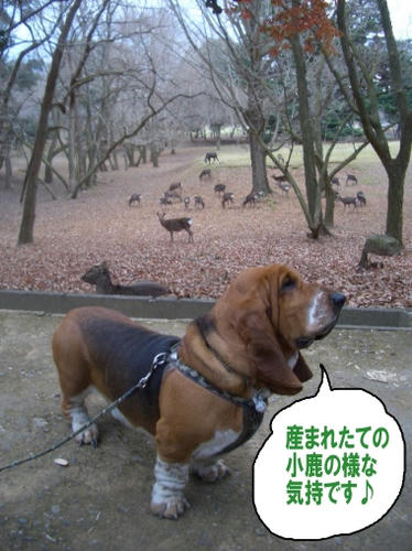 小鹿のエルビー.JPG