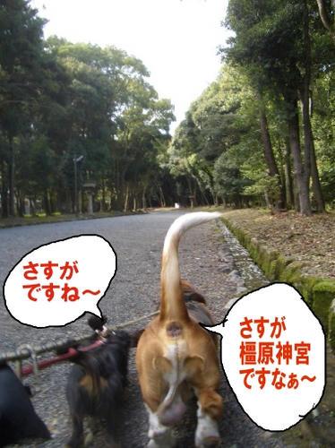 橿原神宮3.JPG