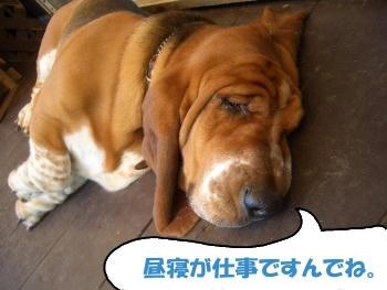 冬眠明けのクマ.JPG