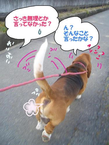 楽しく散歩.JPG