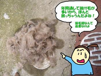抜け毛の量.JPG
