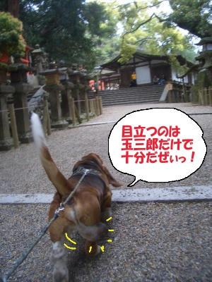 揺れる玉三郎.JPG