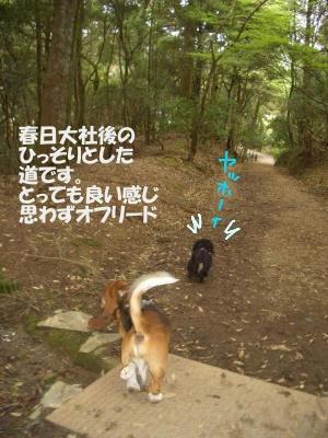 抜け道.JPG