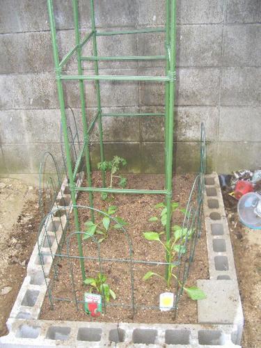 野菜畑っすわ.JPG