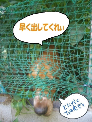 囚われの犬.JPG