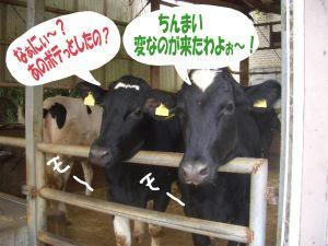 牛さんのお出迎え.jpg