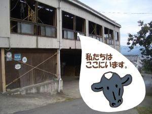なせに2階の牛舎なの?b.JPG